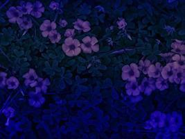 textuur van blauwe planten foto