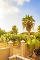 palmen kokospalmen zonsopgang kanarie spaanse eiland tenerife afrika. foto