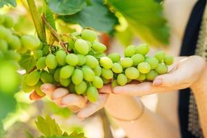 vrouwenhand houdt groene druiven vast in de zomer foto