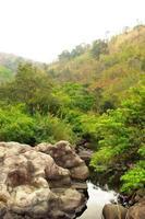 waterloop in droog groenblijvend bos foto