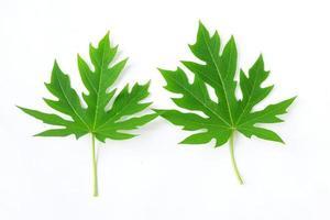papaya blad geïsoleerd op een witte achtergrond foto