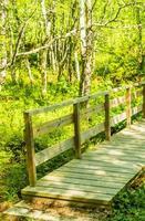 kleine houten brug en voetpad over rivier hemsedal noorwegen. foto