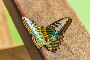 turkoois blauw groen gekleurde vlinder bij kuang si waterval, laos foto