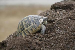 een schildpad in de stad foto