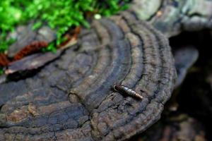 grote houten schimmel met klein bruin langwerpig slakkenhuis en mos foto
