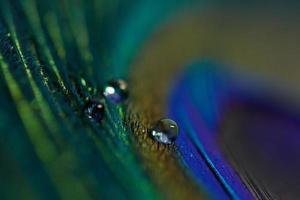 close-up van mooie heldere dauwdruppels op groen blad foto