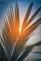 bladeren van kokospalm bij zonsondergang in de buurt van zee. vintage toon. foto