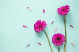 drie roze gerbera's met bloemblaadjes foto