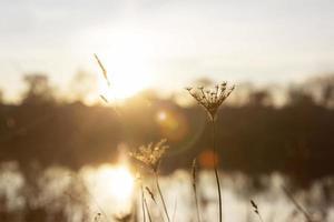 vredig uitzicht in het ochtendlicht foto
