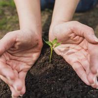 handen die een kleine plant planten foto