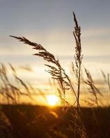 inspirerend uitzicht in het ochtendlicht foto