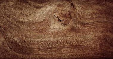 houtstructuur, houten planken achtergrond en oud hout. foto