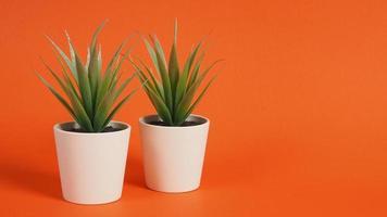 twee kunstmatige cactusplanten of plastic of nepboom op oranje achtergrond. foto