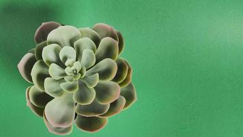 kunstmatige cactusplanten of plastic of nepboom op groene achtergrond. foto