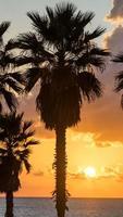 palmboom op het strand tegen kleurrijke avondrood met wolken. tel aviv, Israël. foto