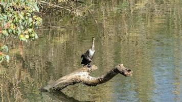 vogel zit op het hout in het midden van de Yarkon River, Tel Aviv, Israël foto