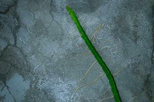 cactus groeit in de gebarsten betonnen muur foto