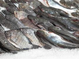 close-up rauwe verse vis koelen op ijs in de marktkraam voor zeevruchten foto