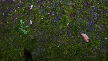 groen mos op de muur foto