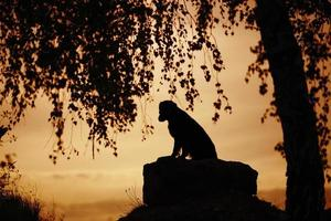 hond zit 's avonds onder een boom foto