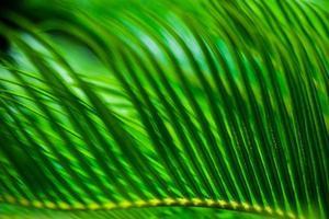 palmbladeren als natuurlijke achtergrond foto
