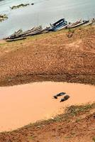 buffels ontspannen zich wentelend in een plas modderig water foto
