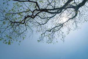 kijk omhoog naar de bomen onder de blauwe lucht foto