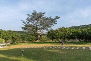 hoge bomen met vreemde blikken in het park foto