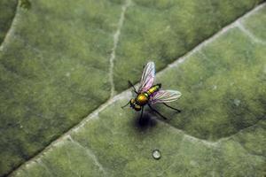close-up van vliegen op een blad foto