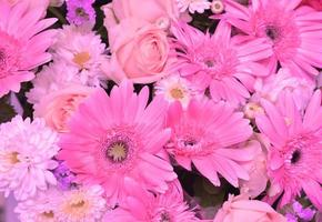 roze toon van verschillende bloemen, gerbera, lelie, rozen, chrysanthemum natuur achtergrond foto
