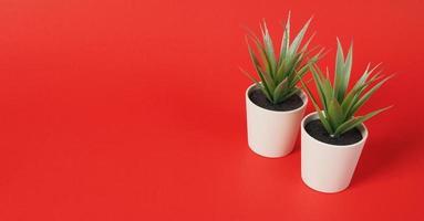 twee kunstmatige cactus of plastic plant of nepboom op rode achtergrond. geen mensen foto