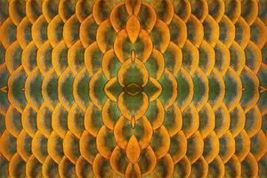 kleurrijke patronen en huid van arowana-vissen. foto
