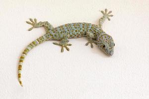 kleurrijke patronen van gekko op gipsen muur foto