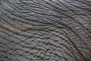 kleurrijke patronen en huid van olifanten foto
