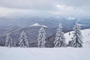 geweldige winterfoto in de Karpaten met besneeuwde sparren. kleurrijke buitenscène, gelukkig nieuwjaar viering concept. post-processed foto in artistieke stijl