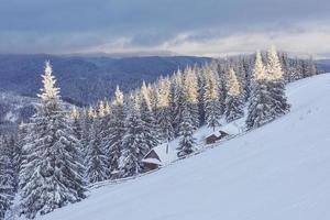 majestueuze witte sparren gloeien door zonlicht. pittoresk en prachtig winters tafereel. locatie plaats karpaten nationaal park, oekraïne, europa. Alpen skigebied. blauwe tinten. gelukkig nieuwjaar schoonheid wereld foto