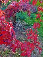 oktober karmozijnrood een herfsttafereel in sam johnson park redmond or foto