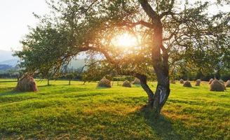mooi herfstzonsopganglandschap in de Karpaten, Europa reizen, West-Oekraïne, Karpaten Nationaal Park, wondere wereld, behanglandschapsachtergrond foto