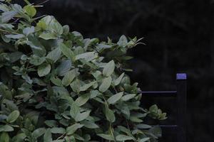 wijnstokken en groene bladeren foto