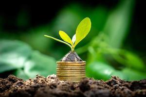 close-up boom groeien van munten foto