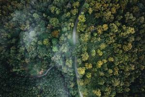 hoge hoekmening van het bos en de mist in de ochtend foto