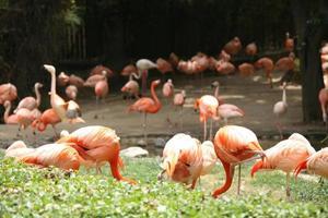 veel flamingo's met grote scherptediepte foto