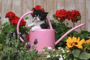 schattig 3 weken oud babykatje in een tuinomgeving foto