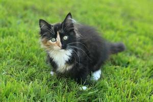 schattig langharig huiskatje met een gespleten gezicht foto