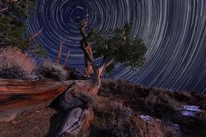 nachtblootstelling stersporen van de hemel in bristlecone pines californië foto