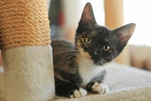 babykat zittend op speeltoren in natuurlijk licht foto