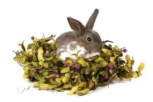 schattig konijntje in foilage op witte achtergrond foto