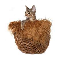 klein katje in een mand foto