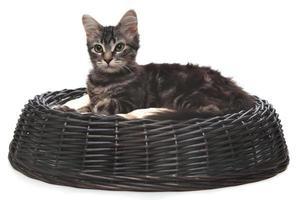 klein katje in een kattenbed foto