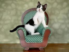 kleine kitten zittend in een stoel foto